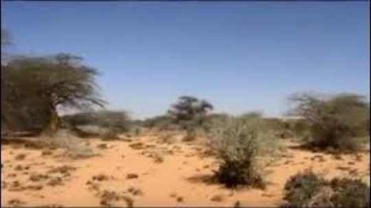 Restore Trees in Somalia