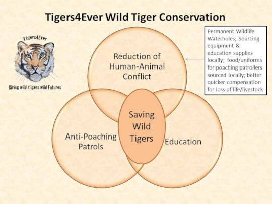 How our projects all put wild tigers at the heart