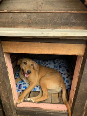 Happy Nourish rescue pup; Joey in her doghouse