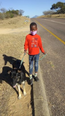 Animal kindness starts at home - walking on leash