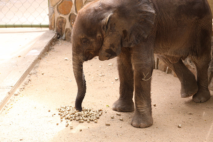 First Dedicated Elephant Nursery in South Africa