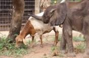 Every Single Elephant counts