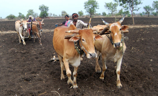 Sustainable Agriculture Development Campaign