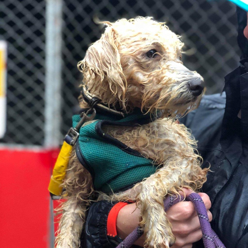 Wet Dog Rescued