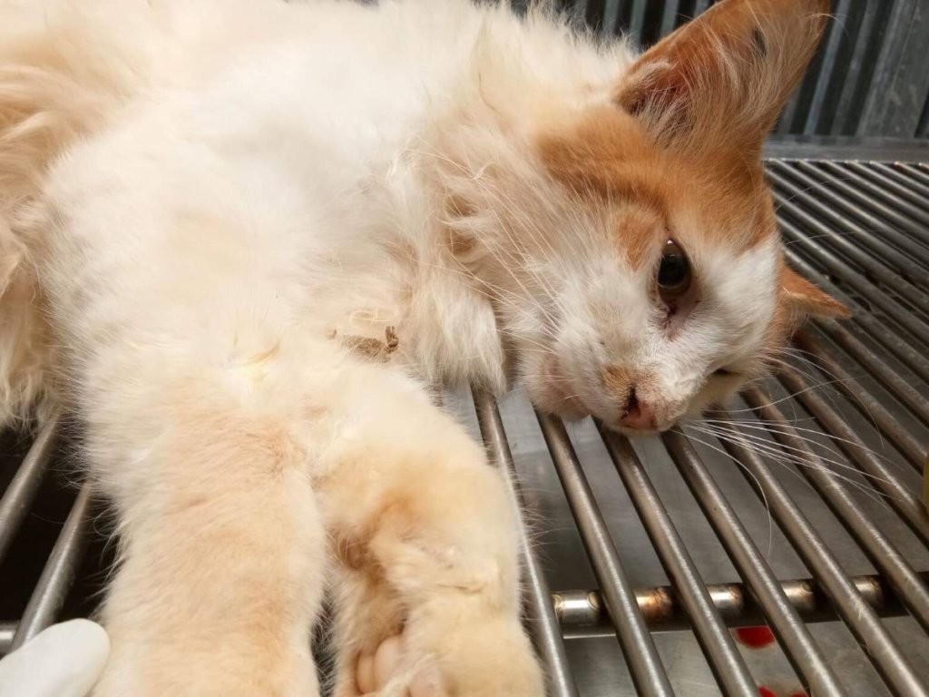 Your donation helps rescue these suffering cats