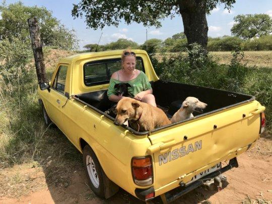 Transport for sick animals