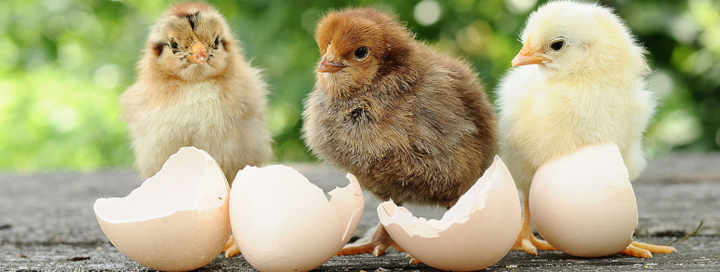 Do something eggstraordinary this springtime!