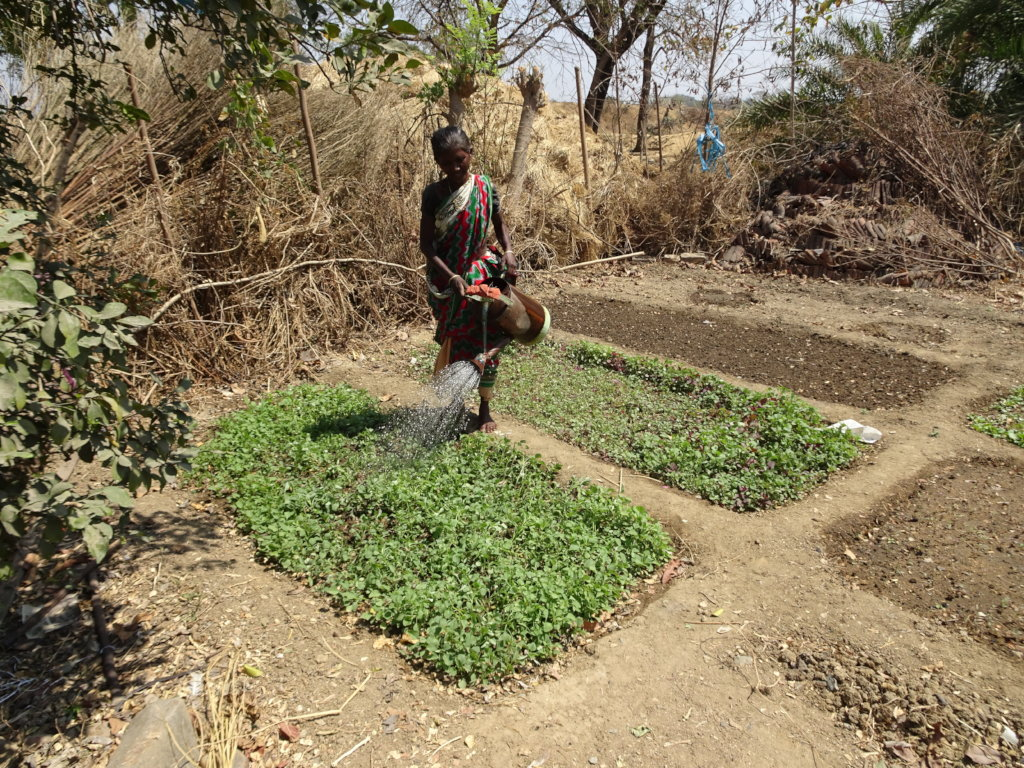 Plant Kitchen Gardens For Mothers In India Globalgiving