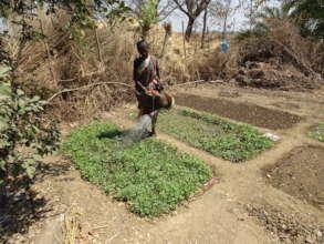 Child Watering Kitchen Garden in India