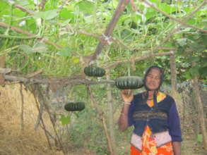 Indian lady in Kitchen Garden with Gourds