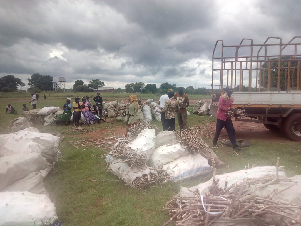 Agricultural Extension Support Activity Project