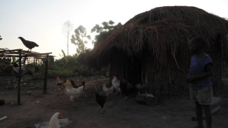 Support 2000 peasant in commercial poultry mgt
