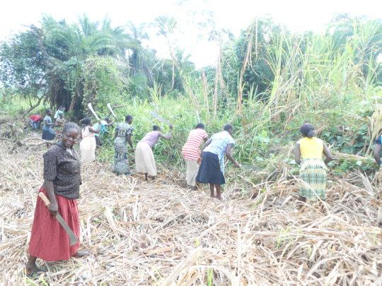 Women farmers at work
