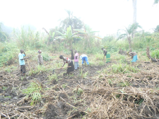 Women farmers till the ground for planting seeds