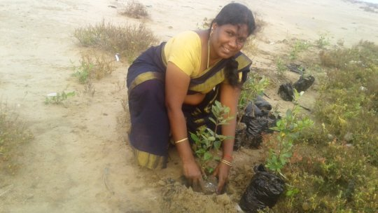 Wetland Mangroves Conservation and Plantation
