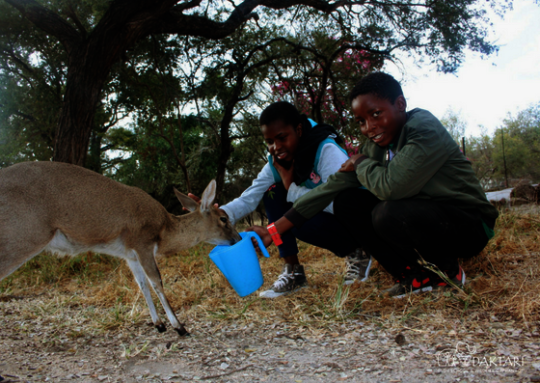 children feeding antelope