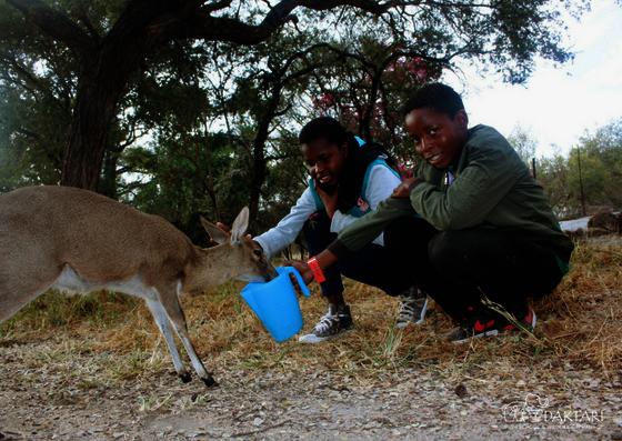 children feeding antelope