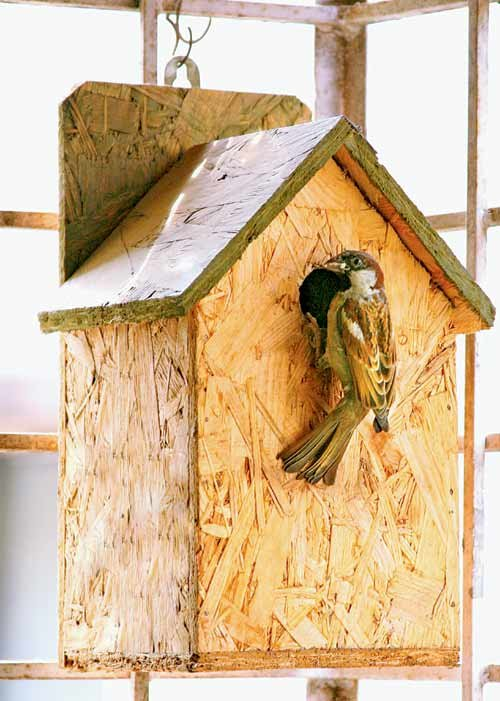 This Summer; Give A Eco-Friendly Nest for Sparrow