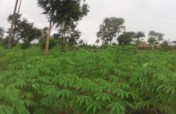Help giving for Cassava-Grater Machine