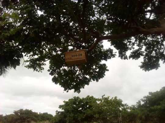 Swarm box ideally sited to attract a bee colony