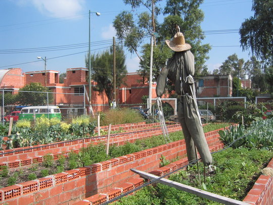 Help Families Grow Food In Urban Farms, Mexico