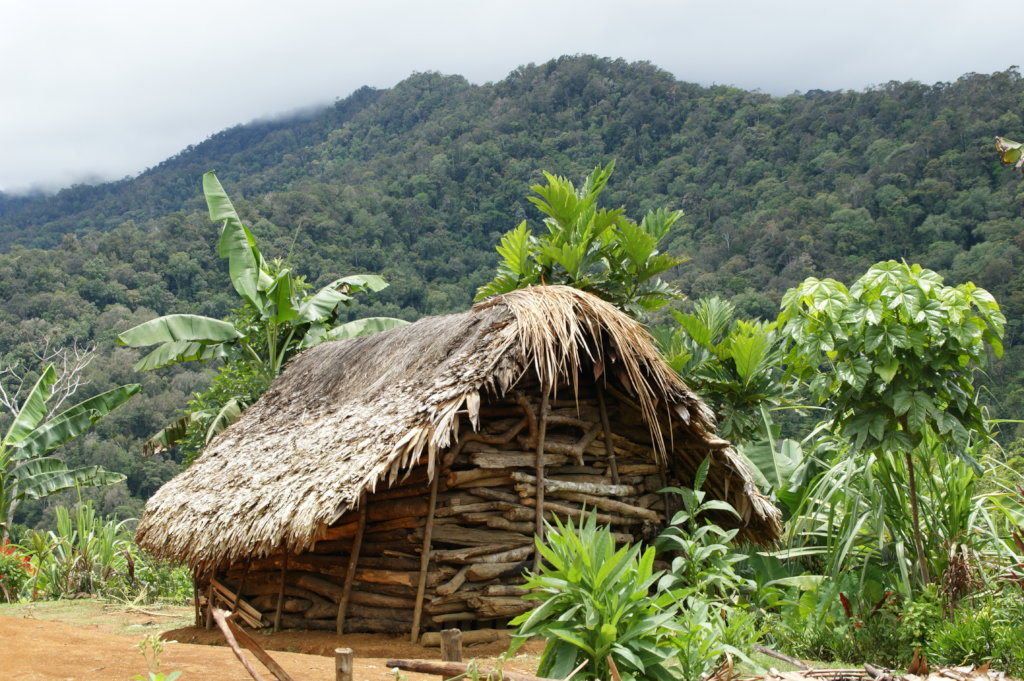 Protect Forest Mothers in Papua New Guinea