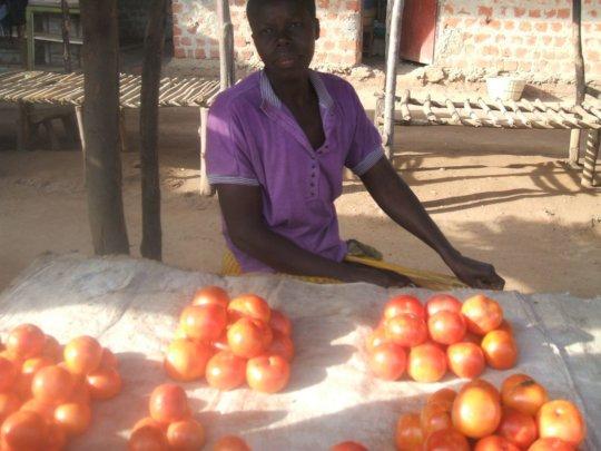 Small loans for 200 families, in Gulu Communities