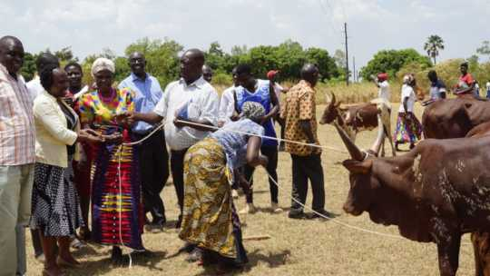 Hope Okeny (ED) handing over a cow to Catherine
