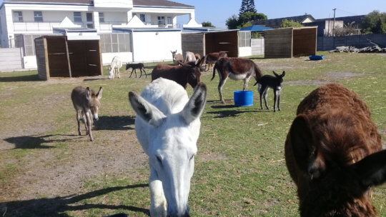 Our herd has new babies needing care