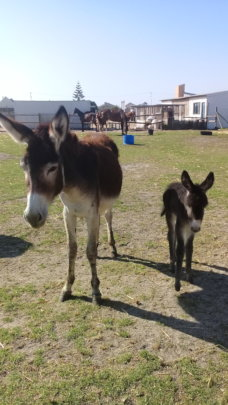 Our donkeys have a safe refuge thanks to your help