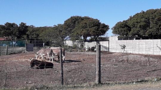 Donkeys in safety at the SPCA farmyard