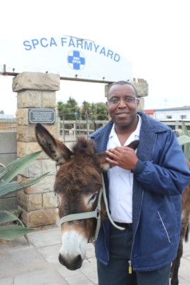 Donkeys need our help