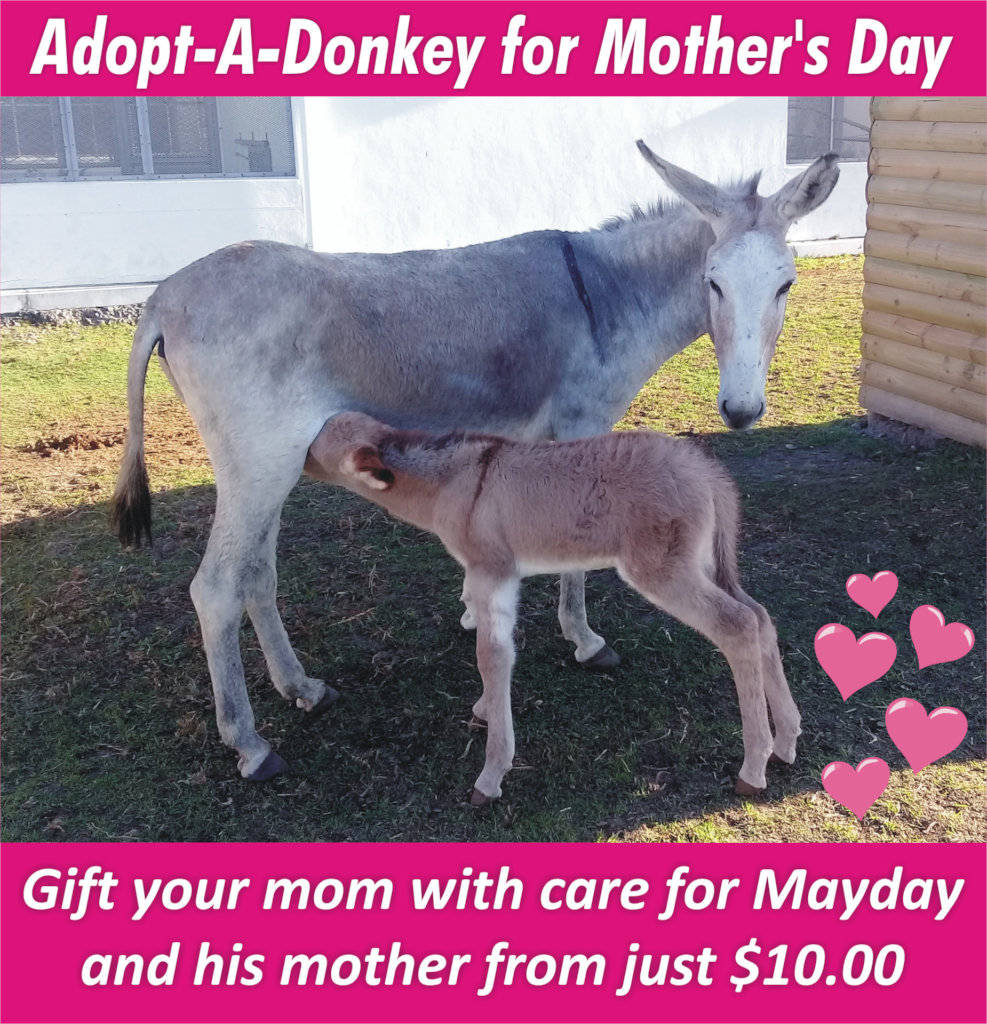 Save a life and Adopt a Donkey in Cape Town