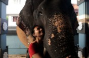 Project Asian Elephants 101 for 101 Youth in India