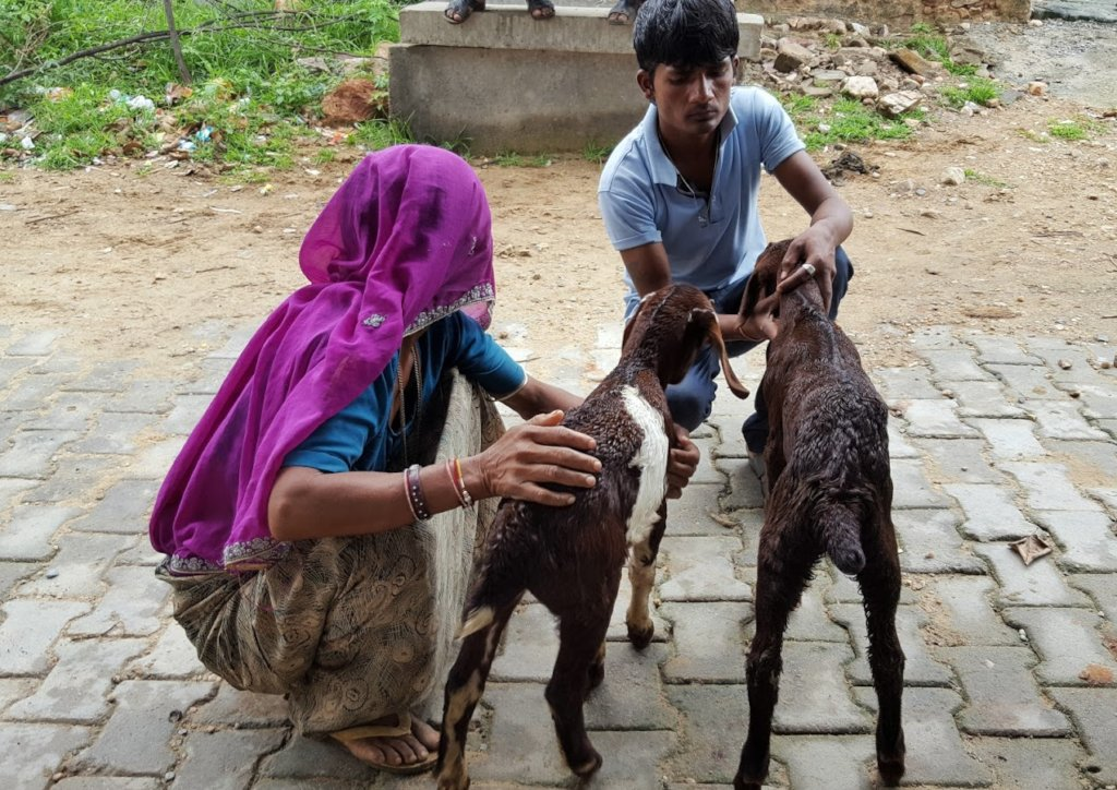 Veterinary care for animals of India's rural poor