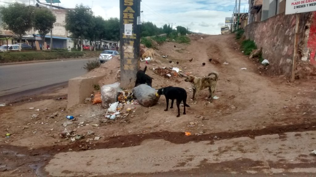 Help the Welfare of Street Dogs in Peru