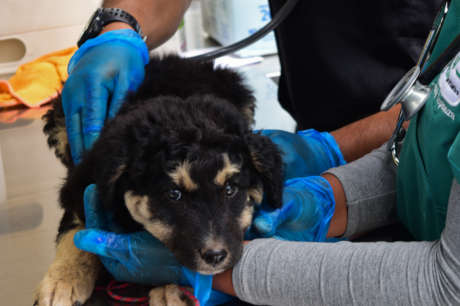 Help the Welfare of Street Dogs in Peru