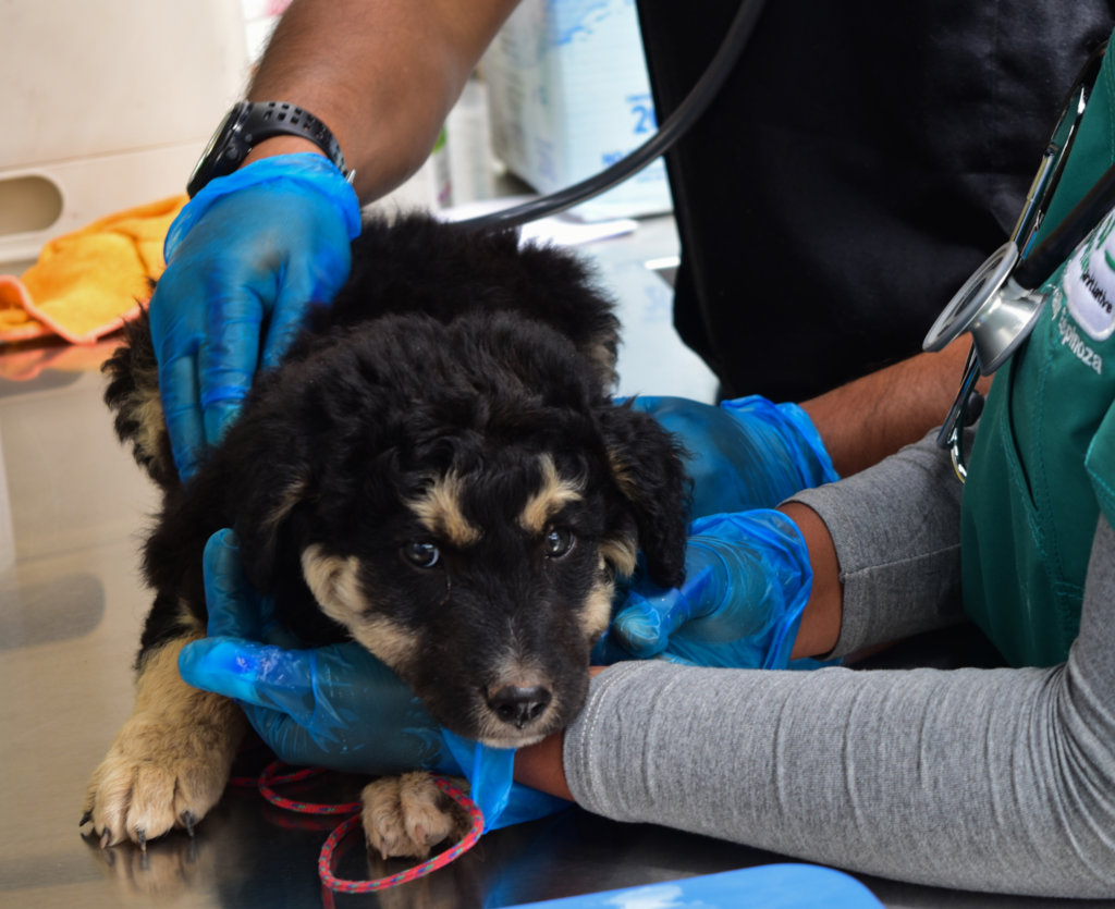 PAWS for Change: Help Street Dogs in Peru