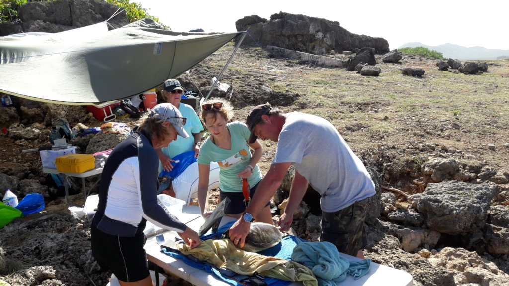 In-water sea turtle population study