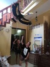 Birds of Cambodia display starts to go up