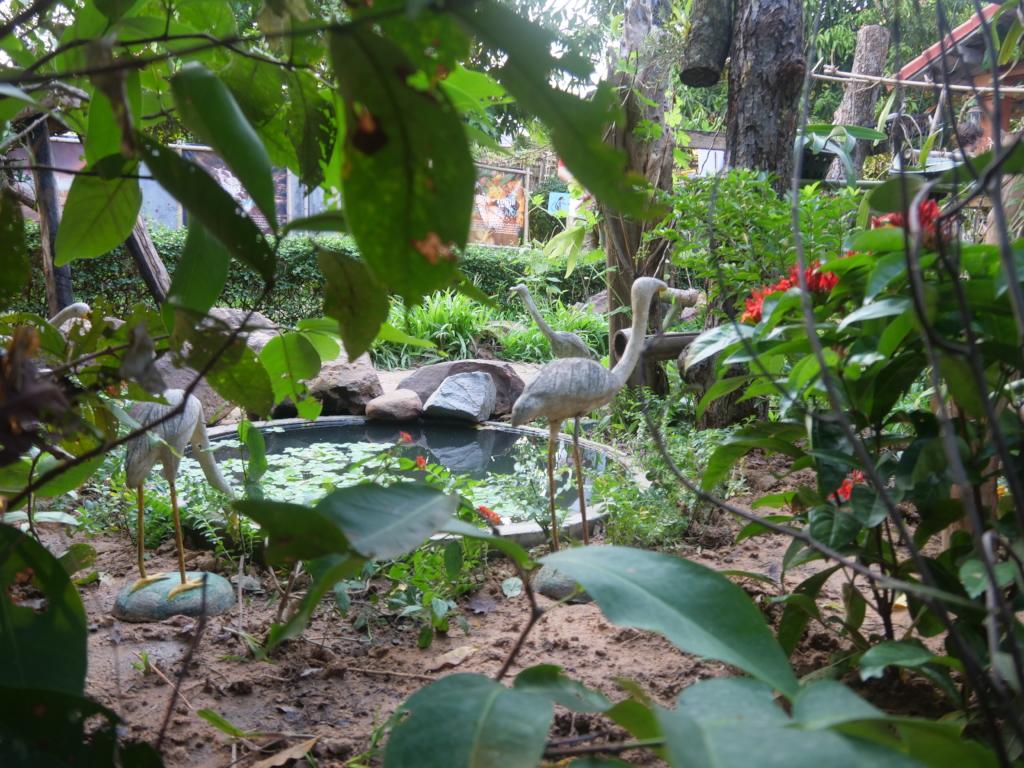 A sneak peek into our garden