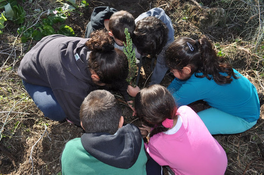 Primary School students plant a new tree