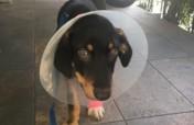 Help Save a Pet's Life