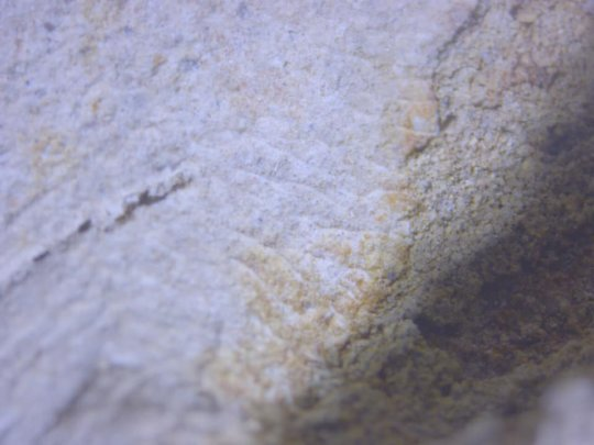 image of a 100s year old fingerprint