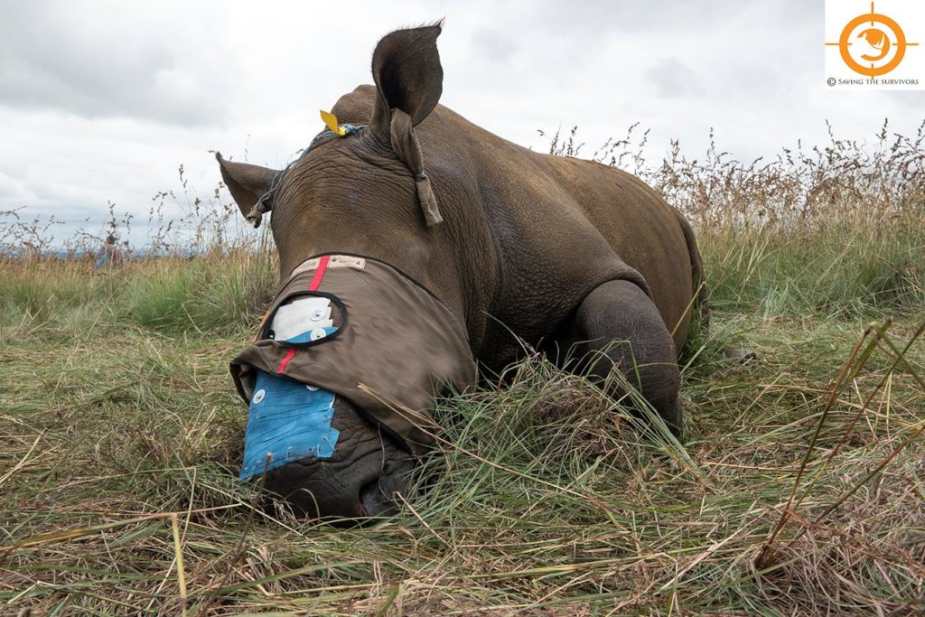 Help us save Thembi the poached White rhino