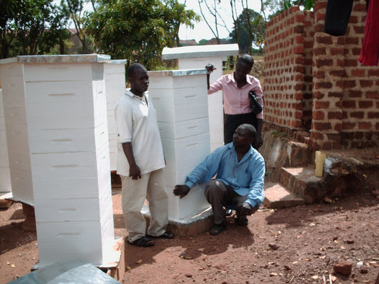 We need your help to make Beehives!
