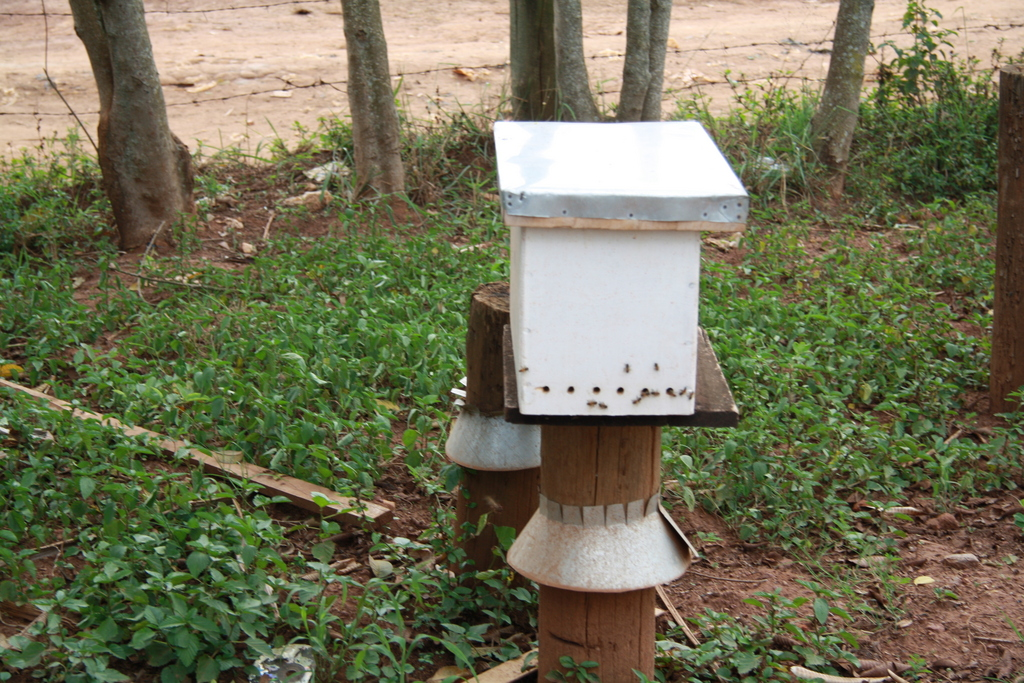 Colonized beehives