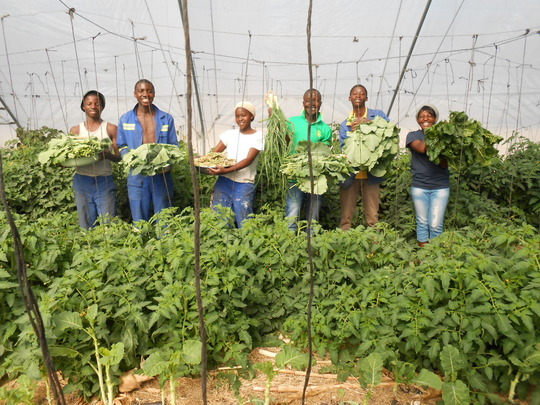 Gathering a bumper crop in our greenhouse