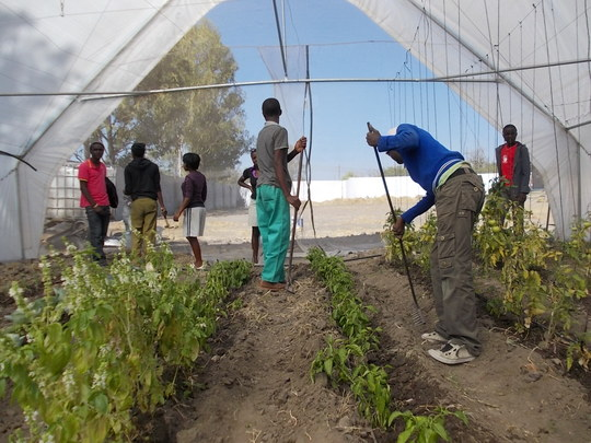 Kids preparing new beds for Chimulia (Kale)