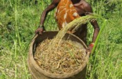 Seed Mothers promote Climate Resilient Crops+Food